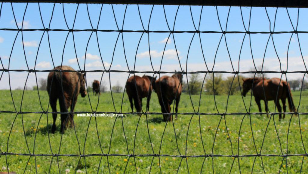 horsesandfence